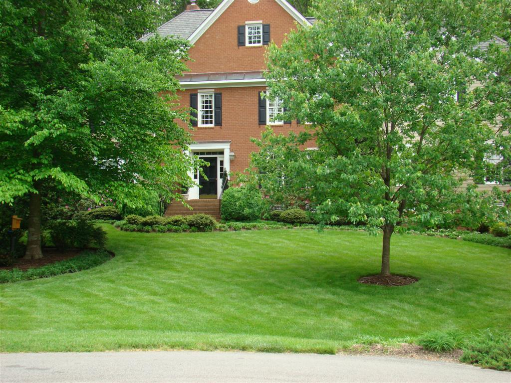 Lawn of the Month - Lawn Care - Virginia Green Lawn Care ...