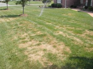Diseases Present In Virginia Lawns Virginia Green Lawn