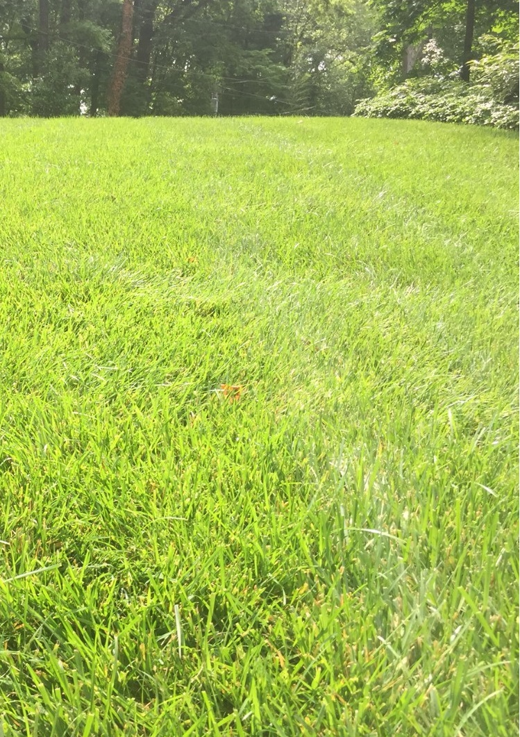 Benefits Of Over Seeding A Tall Fescue Lawn In Midlothian