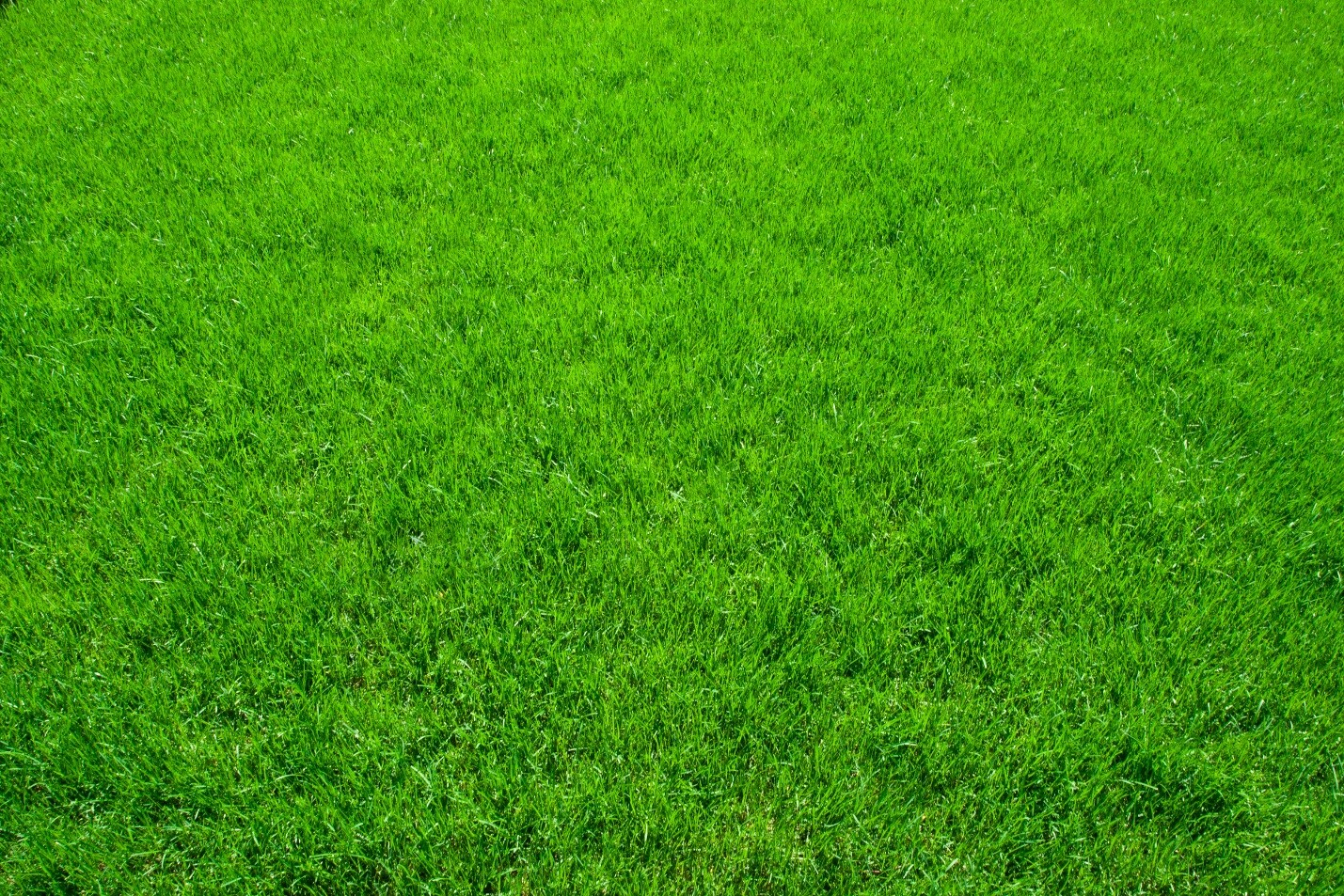 Green Grass Lawn Care Nebraska : Really hot head out on your lawn virginia green care company