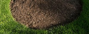 mulch bed surrounded by grass