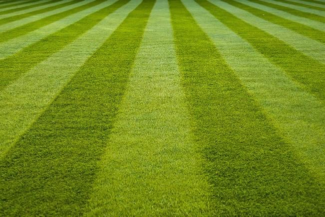 Virginia Green Lawn Care Cost