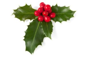 Great Indoor Decorative Plants For The Holidays Virginia