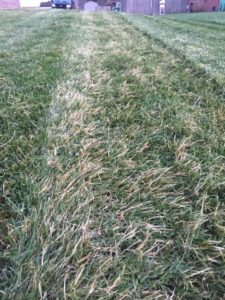 Mower Uneven and Dull Blade1