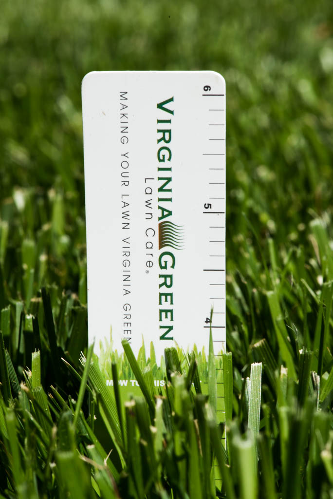 Proper Mowing Of Tall Fescue Virginia Green Lawn Care