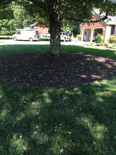Leaves under maple tree