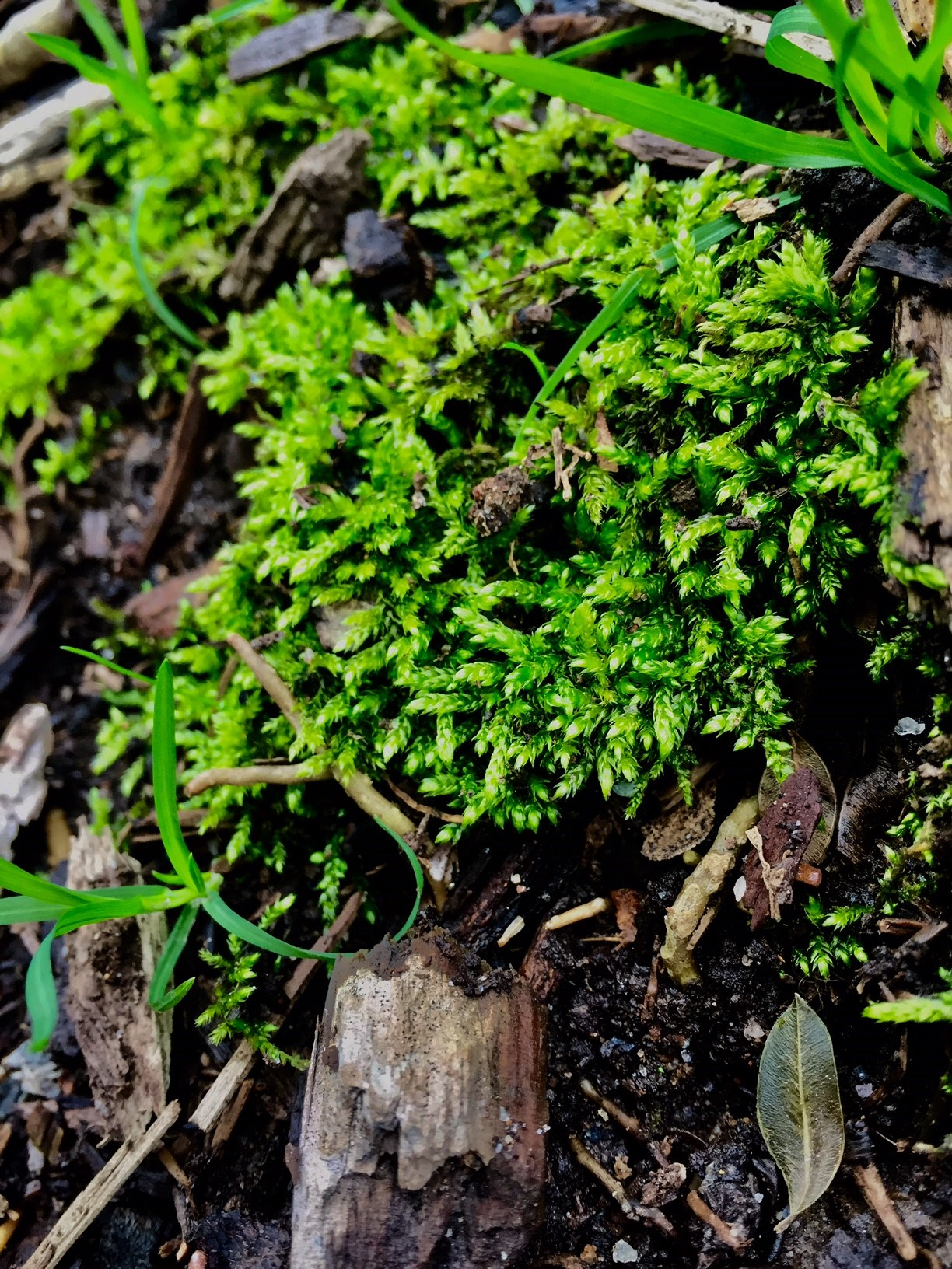How To Remove Moss From Your Lawn