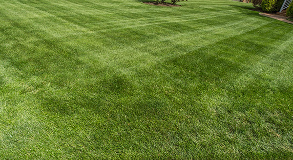 Mowing Practices Virginia Green Lawn Care