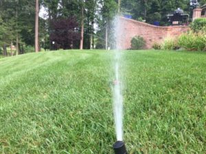 Don 39 T Stop Watering Virginia Green Lawn Care Company