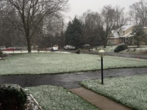 Winter Lawns