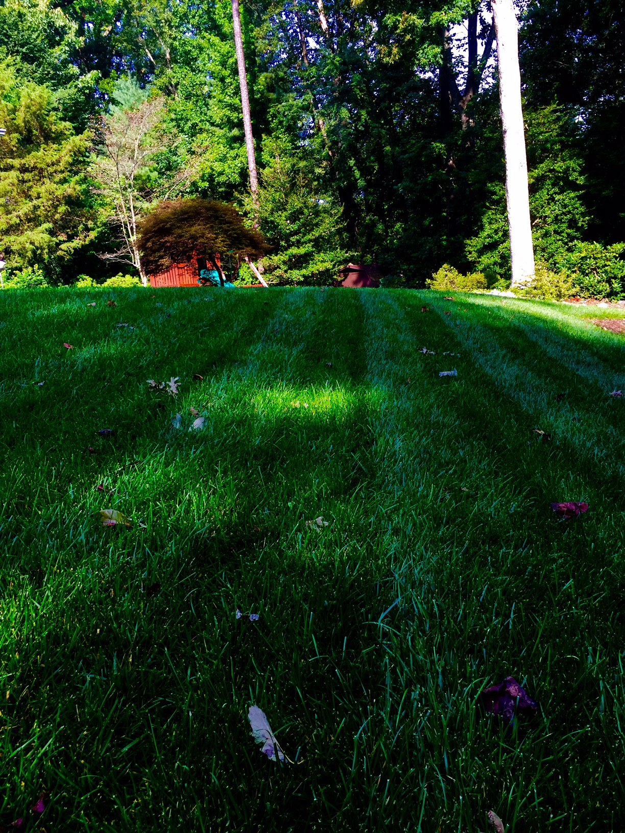 Things To Do On Your Lawn Virginia Green Lawn Care