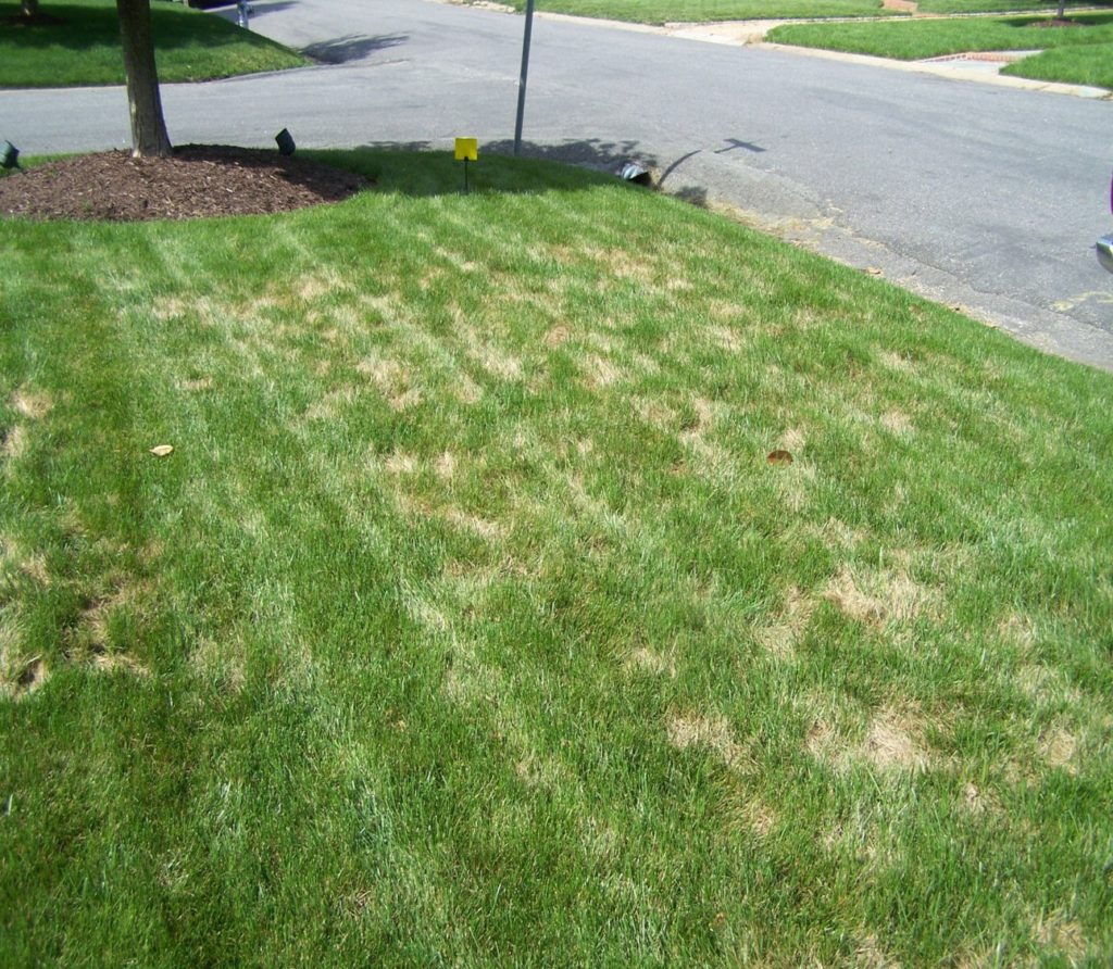 Lawn Disease - Virginia Green Lawn Care Company